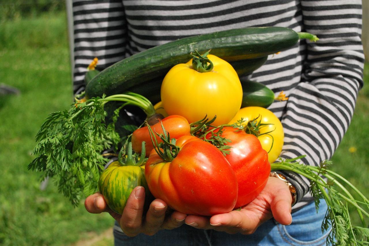 初心者の為の家庭菜園の始め方
