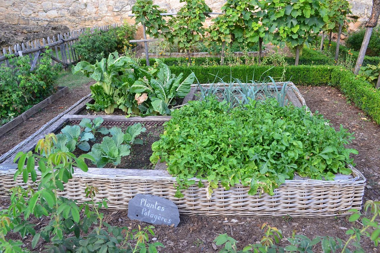 家庭菜園に適した場所と条件とは?