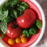 【家庭菜園】始める時に知っておきたい用語一覧